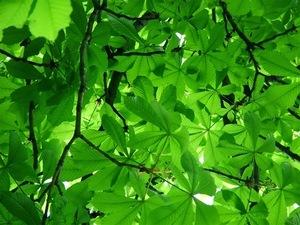 green-tree-light