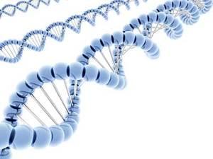 rekayasa-genetika