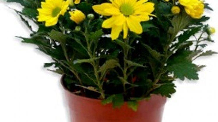 8 Tanaman Hias yang dapat membersihkan udara. Cocok Banget buat ditanam di rumah