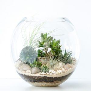 Tanaman terrarium